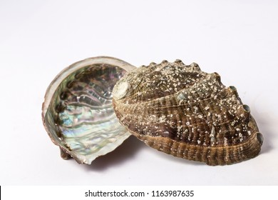 Abalone shell isolated