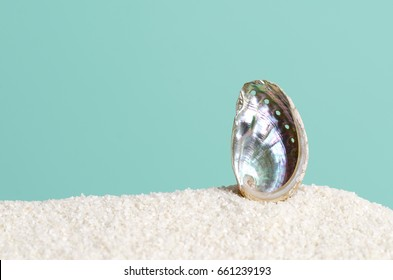 Abalone shell on white sand on turquoise background. Ormer, Haliotis, sea snail, marine gastropod mollusc. Open spiral structure. Iridescent inside nacre surface with respiratory pores. Macro photo.