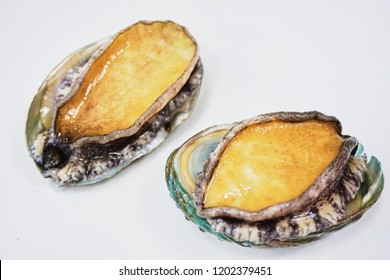 Abalones with white isolated background