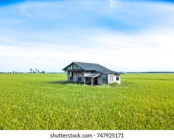 Abandon house at paddy field