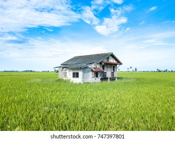 Abandon house at paddy field with aerial view.