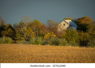 Abandoned Barn In The Trees is a landscape photograph that was created in the early evening in late fall. The abandon barn is barely visible over the autumn colored overgrowth at the end of the field.