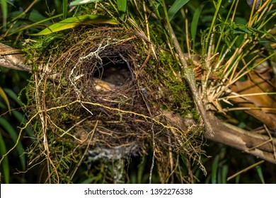 ABANDONED BIRD NEST IN THE JUNGLE
