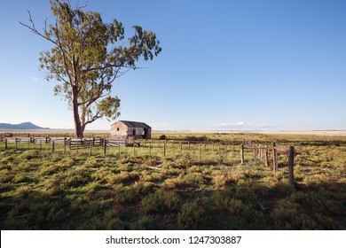 Abandoned brick farmhouse and eucalyptus tree on open plain in South Africa.