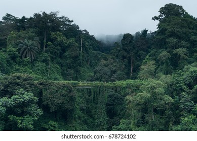 Abandoned bridge taken over by the jungle in Equatorial Guinea