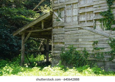 Abandoned building in the bushes and tress on Cats Island, Japan