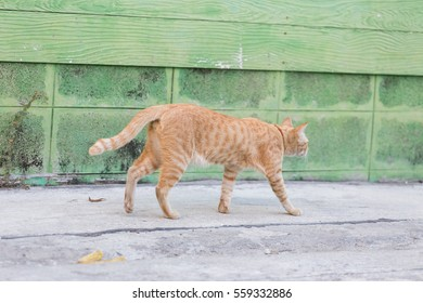 Abandoned cat in village