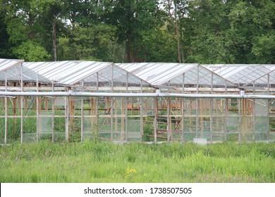 abandoned and dilapidated greenhouse with broken windows and rusty rafters in a meadow in Nieuwerkerk aan den IJssel