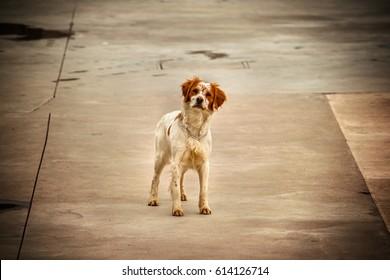abandoned dog, focus on solitary animal