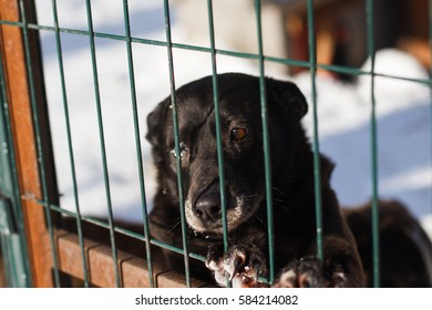 Abandoned dog in the kennel,homeless dog behind bars in an animal shelter.Sad looking dog behind the fence looking out through the wire of his cage/Animal shelter.Boarding home for dogs