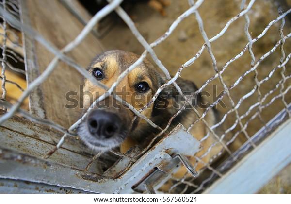 Un chien abandonné dans le chenil, un chien sans abri derrière les barreaux dans un refuge pour animaux.Un chien triste regardant derrière la clôture regardant par le fil de sa cage/refuge pour animaux.Un refuge pour chiens