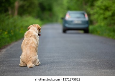 Abandoned dog on the road