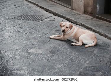 Abandoned dog on the road