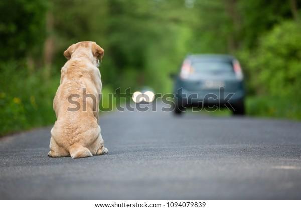 Chien abandonné sur la route