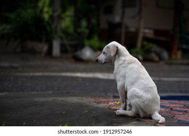Abandoned dog on the road, stray dog, Puppy, dirty, homeless Dog