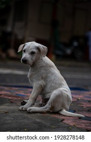 Abandoned dog on the road, stray dog, Puppy, dirty