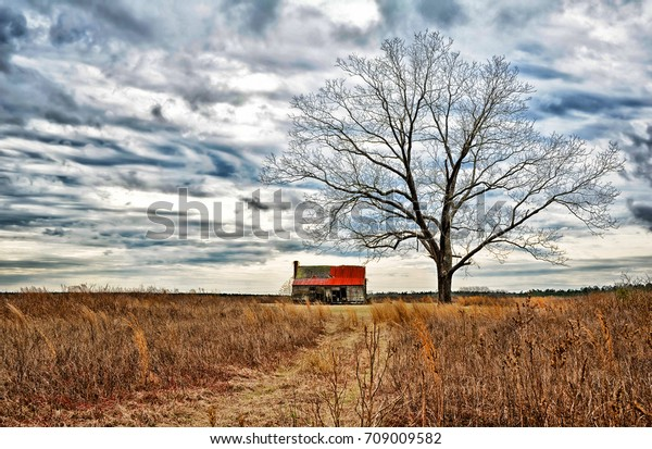 abandoned-farmhouse-oak-tree-field-600w-