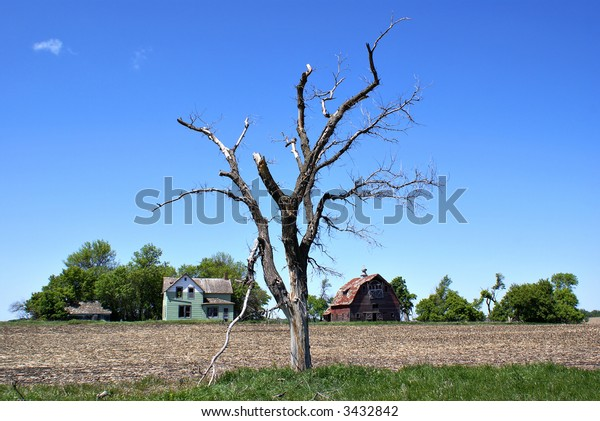 Abandoned farmstead and dead tree under a clear blue sky.