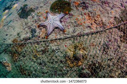 Dead Marine Life Images, Stock Photos & Vectors | Shutterstock