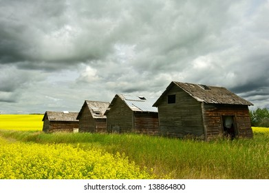 Abandoned granaries in canola field with rain clouds overhead