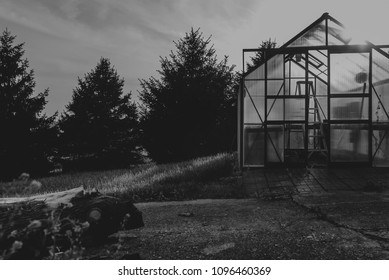 Abandoned Greenhouse on a Sunny Day
