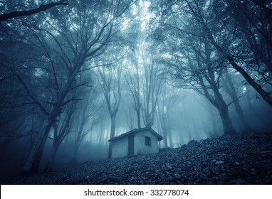 Abandoned haunted house in the magic forest.