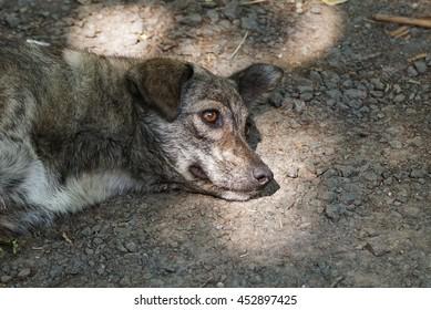 Abandoned homeless stray dog on the street