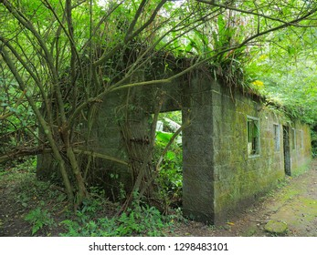 Abandoned house in the forest