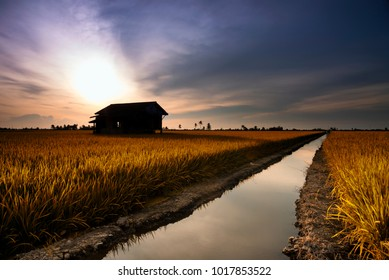 Abandoned house at middle paddy field during evening in false color.