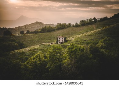Abandoned house in the middle of vineyard at sunset, Friuli Venezia Giulia, Italy