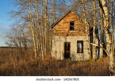 Abandoned house surrounded by aspen trees and dry grass