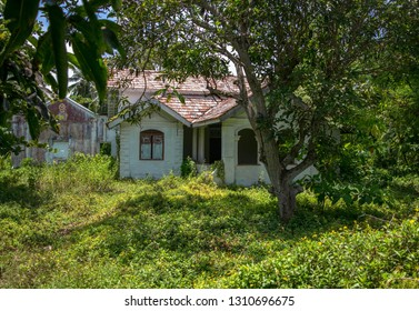 Abandoned house with trees