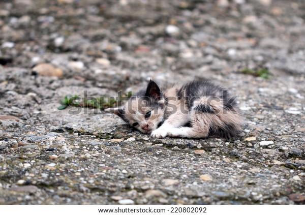 chaton abandonné sur le sol