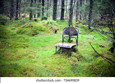 Abandoned, lost forest place with very old and damaged chair and green mosh. Autumn forest. Loneliness and emptiness concept.