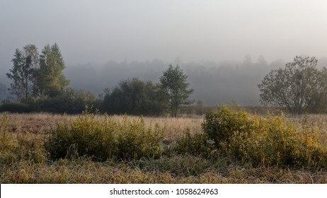 Abandoned meadow at misty morning on the edge of Bialowieza Forest in autumn, Bialowieza forest, Poland, Europe