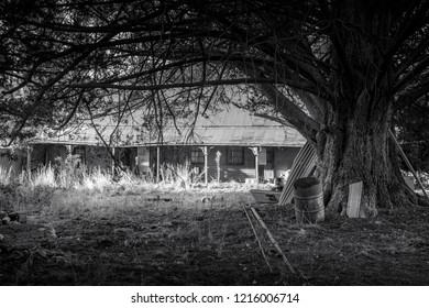 Abandoned old Australian rural homestead with corrugated bullnose verandah and discarded items scattered outside under beautiful grand old tree