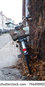 Abandoned old bicycle entangled in dry ivy branches