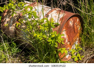 Abandoned Old Rusty Metal Drum Covered in Weeds, Vegetation
