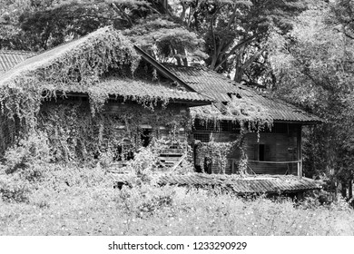 An abandoned old wooden house covered with ivy and grass