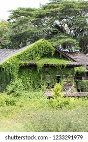 An abandoned old wooden house covered with ivy and green grass