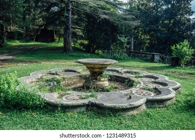 Abandoned overgrown round fountain in old park