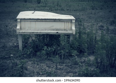 Abandoned piano in the wild