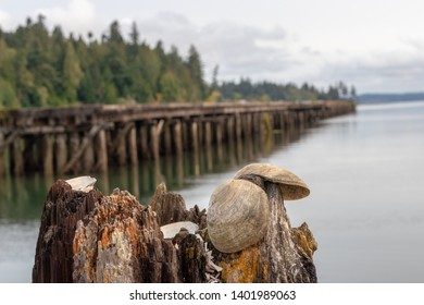 Abandoned pier with seashells visible in the foreground