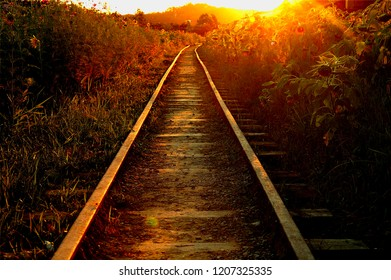 Abandoned railroad between sagged sunflowers at dusk