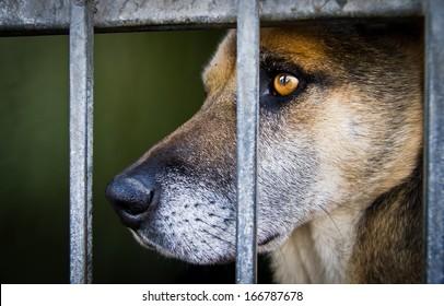 Abandoned sad dog waits behind grids