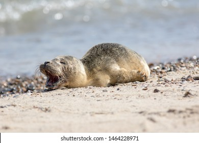 Crying Animal Images, Stock Photos & Vectors | Shutterstock