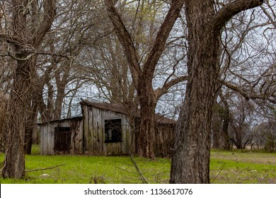 Abandoned Shack in Woods