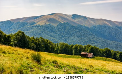 abandoned sheep herd shed on hillside. forest behind the grassy meadow. lovely countryside landscape in mountains