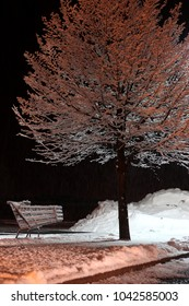 Abandoned shopping cart and tree frosted with snow