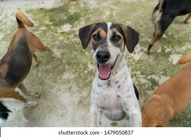 Abandoned at the stray dog shelter, dogs looking for a home look into the camera.
